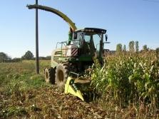 Sklizeň kukuřice